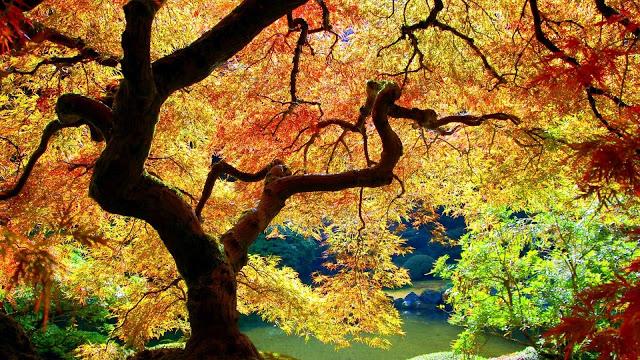 autumn-wallpaper-for-desktop-1920x1080-1012098